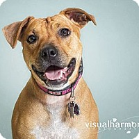 Adopt A Pet :: Charlene (AKA Charlie) - Phoenix, AZ