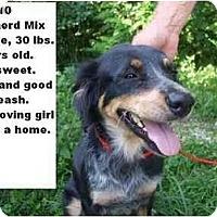 Adopt A Pet :: # 370-10 @ Animal Shelter - Zanesville, OH