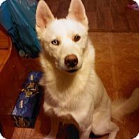 Adopt A Pet :: Cally - East McKeesport, PA