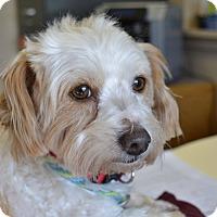 Adopt A Pet :: Naomi - Meridian, ID