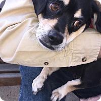 Adopt A Pet :: Nina - Brick, NJ