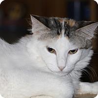 Adopt A Pet :: Denise - Encino, CA
