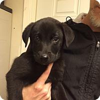 Adopt A Pet :: Dudley - Fair Oaks Ranch, TX