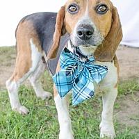 Adopt A Pet :: Herman - Doylestown, PA