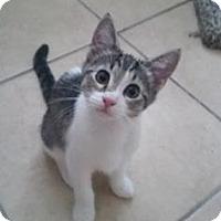 Adopt A Pet :: Lexi 3 - Bulverde, TX
