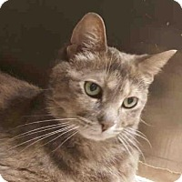 Adopt A Pet :: TONYA - Toronto, ON