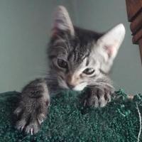 Adopt A Pet :: Clyde - Owatonna, MN