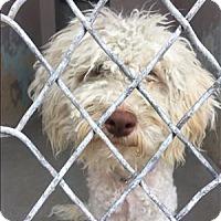Adopt A Pet :: Hansel - Encino, CA