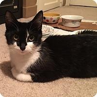 Adopt A Pet :: Maisie - Plainville, CT