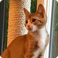 Adopt A Pet :: Cole - Walnut Creek, CA