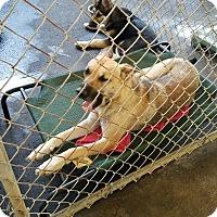 Adopt A Pet :: CECE - Gustine, CA