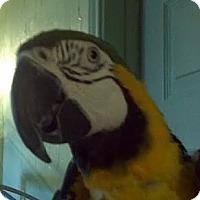 Adopt A Pet :: Booger - Red Oak, TX