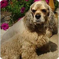 Adopt A Pet :: Prinz - Sugarland, TX