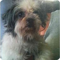 Adopt A Pet :: Syble - Kingsburg, CA