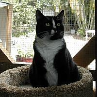 Adopt A Pet :: Shorty - Naples, FL