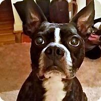 Adopt A Pet :: Arthur - Greensboro, NC