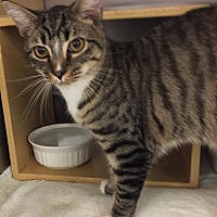 Adopt A Pet :: Kenny - Morganton, NC