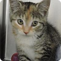 Adopt A Pet :: Ember - Massapequa, NY