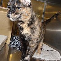 Adopt A Pet :: Mimi - Logan, UT
