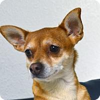 Adopt A Pet :: June - Casa Grande, AZ