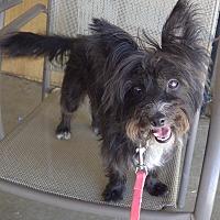 Adopt A Pet :: Stella - Quail Valley, CA