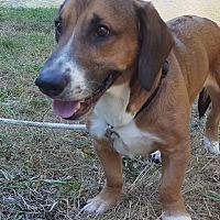 Adopt A Pet :: Otis - Forest grove, OR