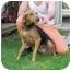 Photo 2 - Hound (Unknown Type) Mix Dog for adoption in Gladwin, Michigan - Hound