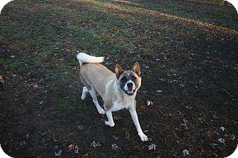 Akita Dog for adoption in Virginia Beach, Virginia - Damsel