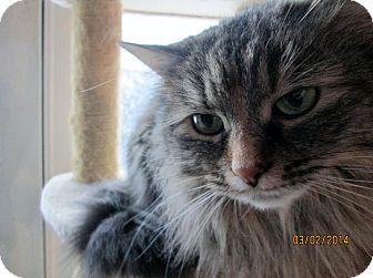 Domestic Longhair Cat for adoption in Cincinnati, Ohio - Francesca