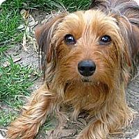 Adopt A Pet :: *Kiko - COURTESY POST - Westport, CT