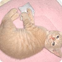 Adopt A Pet :: Luke - Richmond, VA