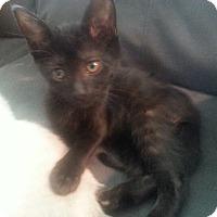 Adopt A Pet :: Pepper - Lawrenceville, GA