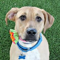 Adopt A Pet :: Leeda - Loxahatchee, FL