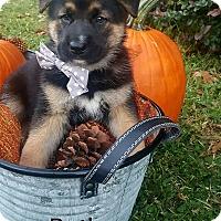 Adopt A Pet :: Butler - Gainesville, FL