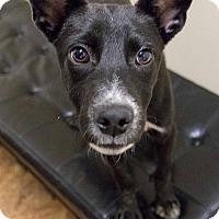 Adopt A Pet :: Carrie Mathison - Jersey City, NJ