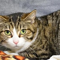 Adopt A Pet :: Queen Snugglewumps - Neenah, WI
