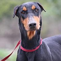 Adopt A Pet :: Vanessa - Fillmore, CA