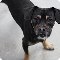 Adopt A Pet :: DOUGY - Phoenix, AZ