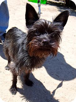 Terrier (Unknown Type, Medium) Mix Dog for adoption in Seal Beach, California - Breeze
