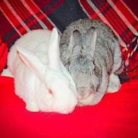 Adopt A Pet :: Jasper - Edmonton, AB