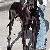 Adopt A Pet :: Lacy - Martinsburg, WV