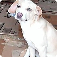 Adopt A Pet :: Nikki - Houston, TX