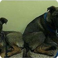 Adopt A Pet :: Hansel - Oceanside, CA
