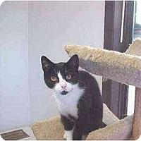 Adopt A Pet :: Elfie - Quincy, MA