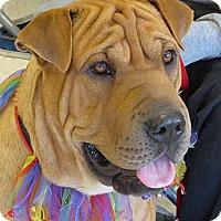 Adopt A Pet :: Tiny - Scottsdale, AZ