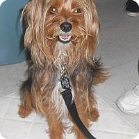 Adopt A Pet :: Doodle - Lockhart, TX