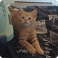 Adopt A Pet :: Court - Edmonton, AB