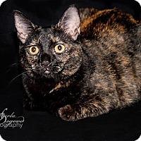 Adopt A Pet :: Joy - Chino Hills, CA