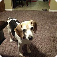 Adopt A Pet :: Georgina - Loveland, CO