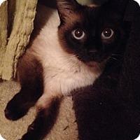 Adopt A Pet :: PriscillaP - North Highlands, CA